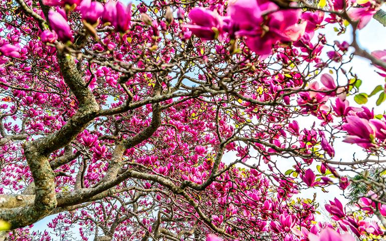 Если на падающем дереве были цветы