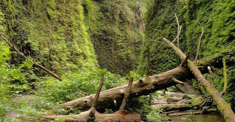 Радение дерева в воду