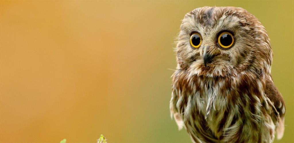 Кому приснилась сова