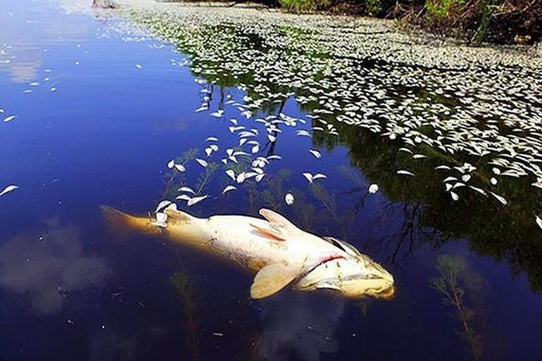 Протухшая рыба, плывущая по течению