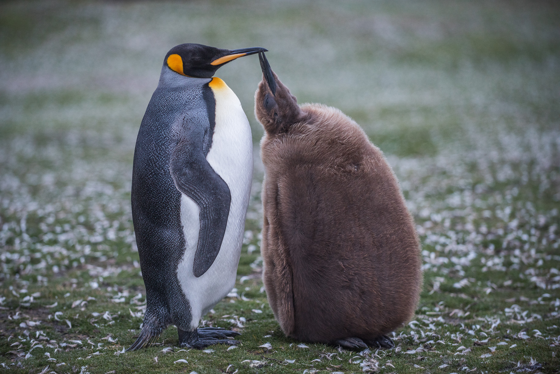 невзгоды фото пингвинов с цветочками опыт приходит