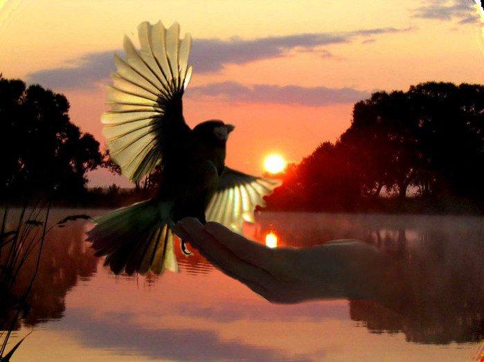 Я отпускаю тебя картинки с птицами