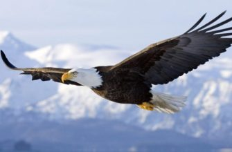 К чему снится большая птица