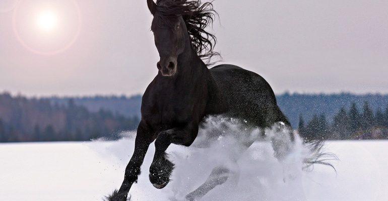 К чему снится черная лошадь