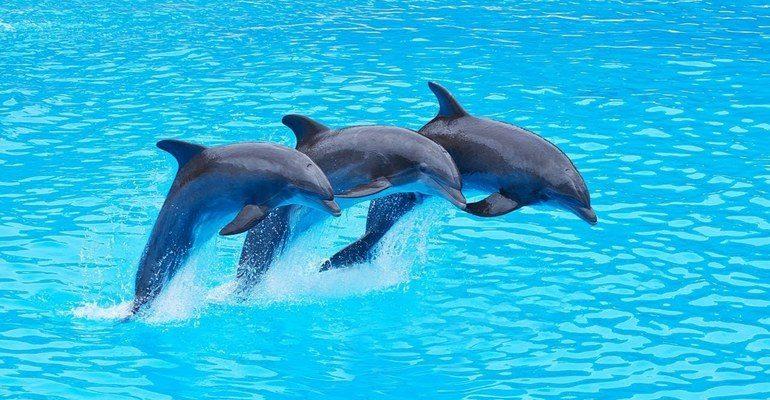 К чему снится дельфины сонник