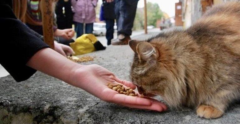 К чему снится кормить кошку