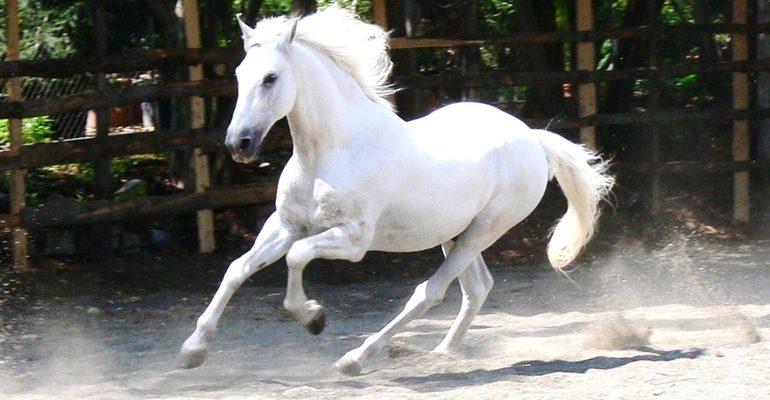 К чему снится лошадь белая