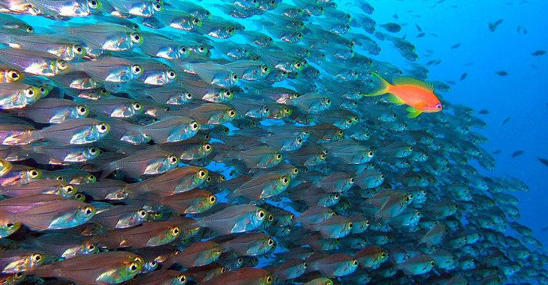 К чему снится очень много рыбы