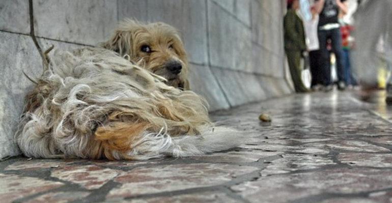 К чему снится убить собаку