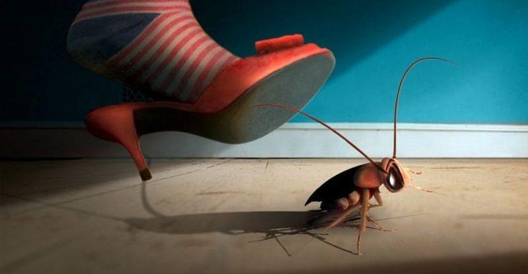 К чему снится убить таракана
