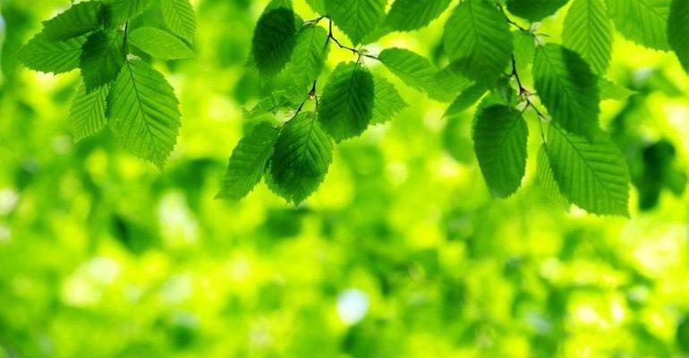 К чему снится зеленый цвет
