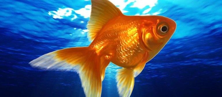 К чему снится золотая рыбка