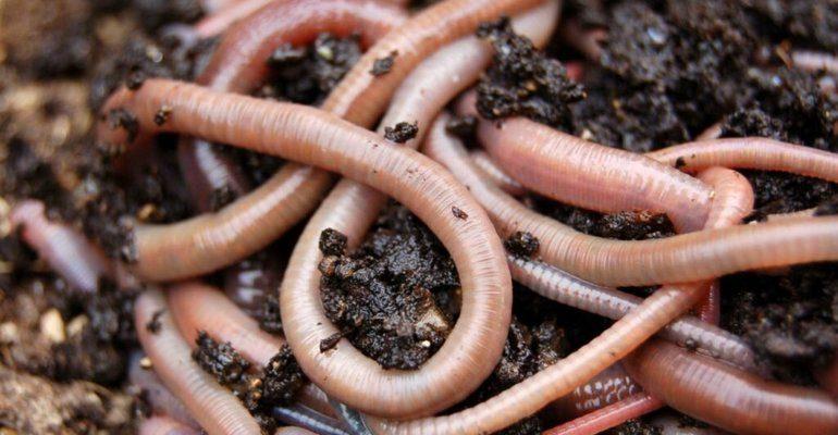 К чему снятся черви