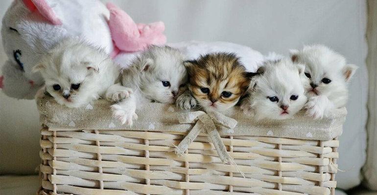 К чему снятся маленькие котята