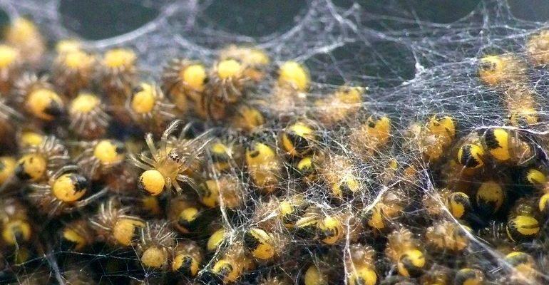 К чему снятся много пауков