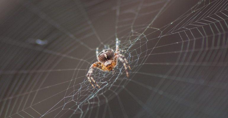 К чему снятся пауки на паутине