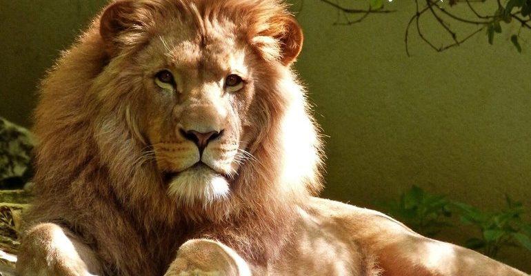 Лев является символом величия