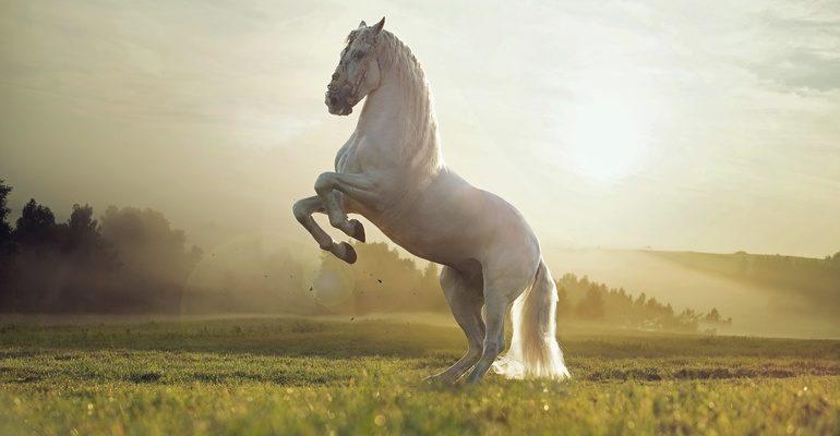 Лошадь во сне к чему снится