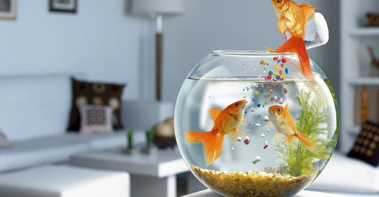 Сонник аквариум с рыбками женщине