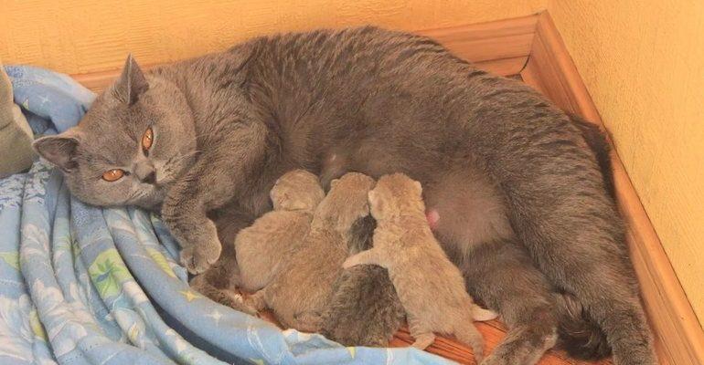 Сонник кошка родила котят к чему снится