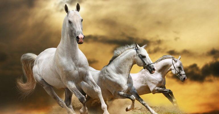 Сонник лошади бегут