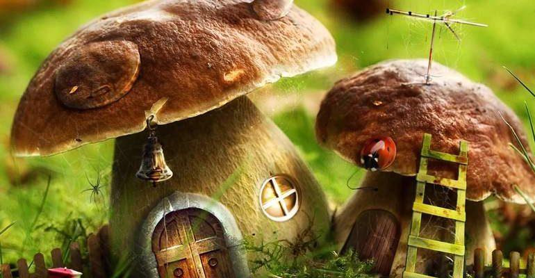 Толкования разных сонников к чему снятся грибы