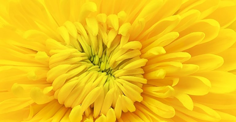 Желтый цвет во сне