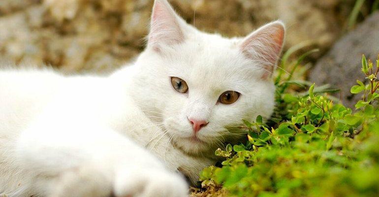 К чему снится кошка белая