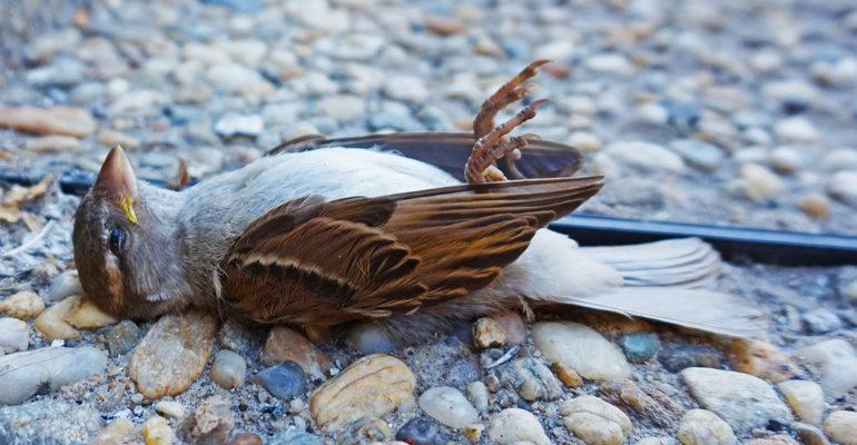 К чему снится мертвая птица сонник