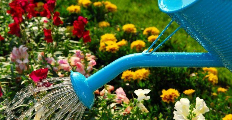 К чему снится поливать цветы