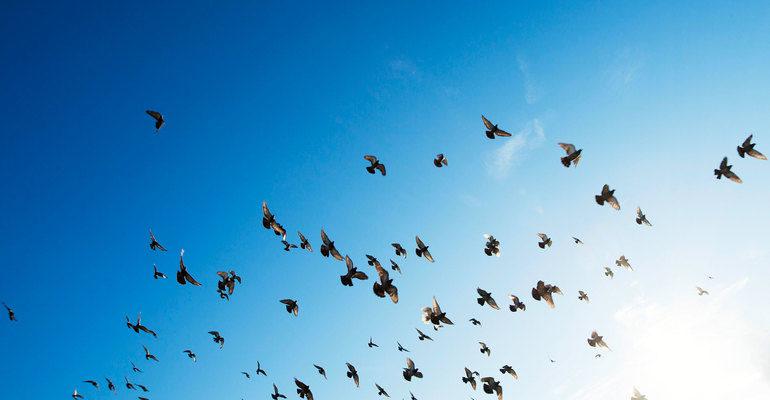 К чему снится птица сонник