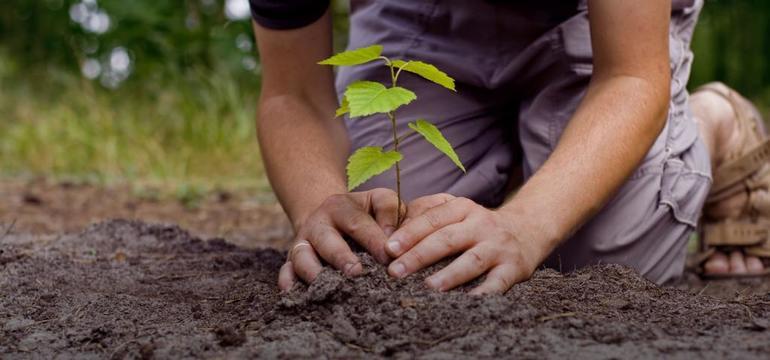 К чему снится сажать дерево