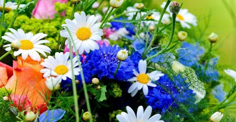 К чему снятся полевые цветы