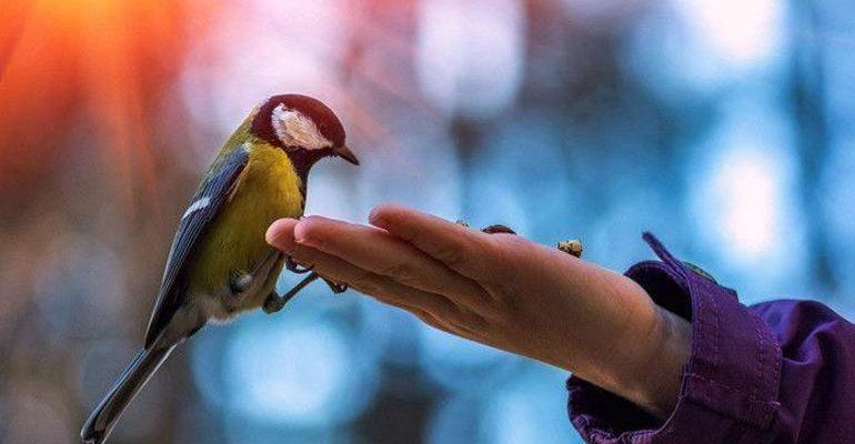 Кормить птиц с рук