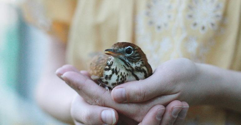 Сонник птица в руках