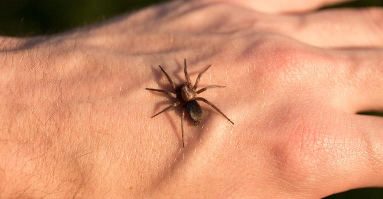 Сонник укусил паук к чему снится