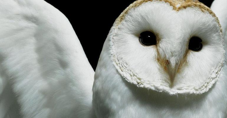 Белая птица во сне