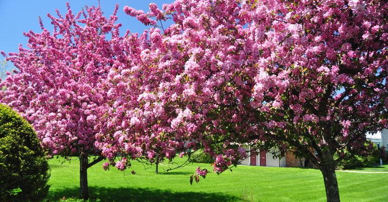 К чему снится цветущее дерево