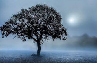 К чему снится деревья