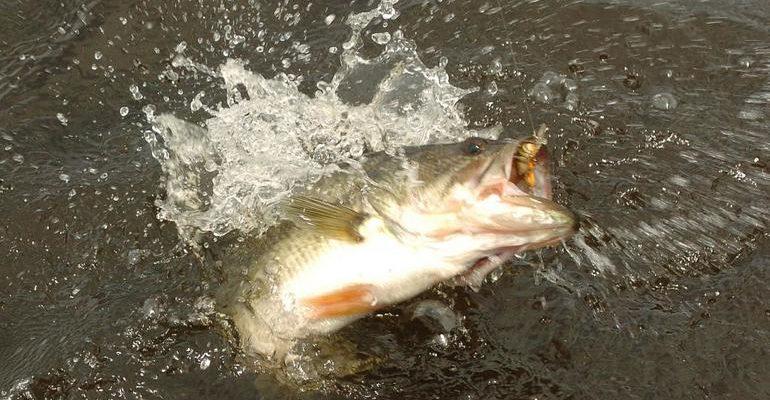 К чему снится голова рыбы