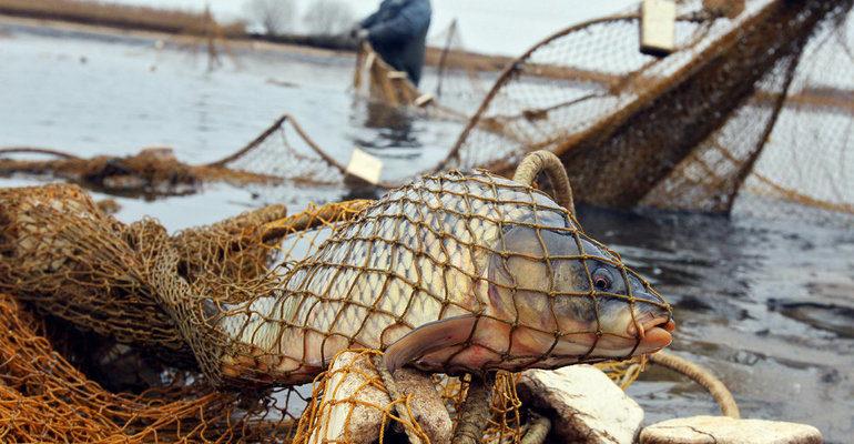 К чему снится ловить рыбу сетью