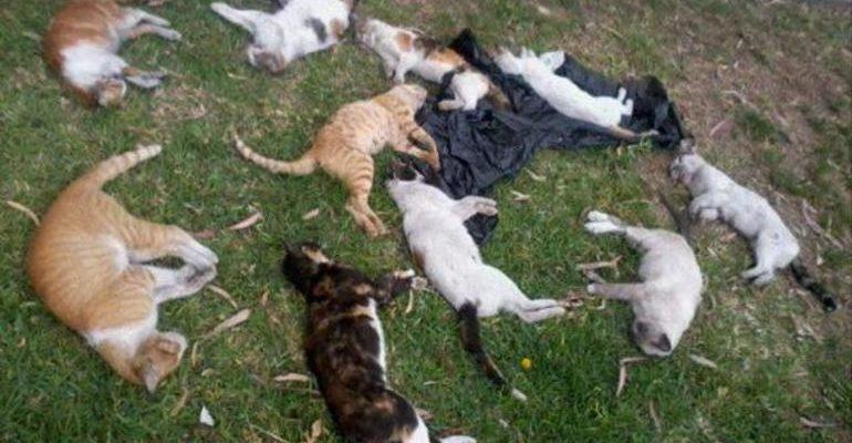 К чему снится мертвые животные