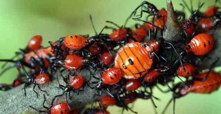 К чему снится много живых жуков