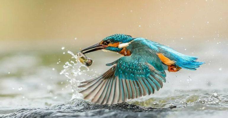 К чему снится поймать птицу
