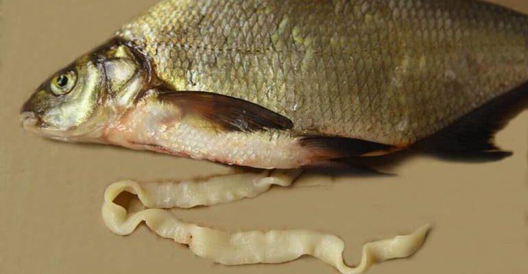 К чему снится рыба с червями