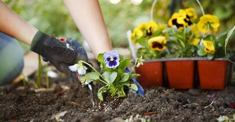 К чему снится сажать цветы