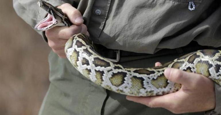 К чему снится змею убить