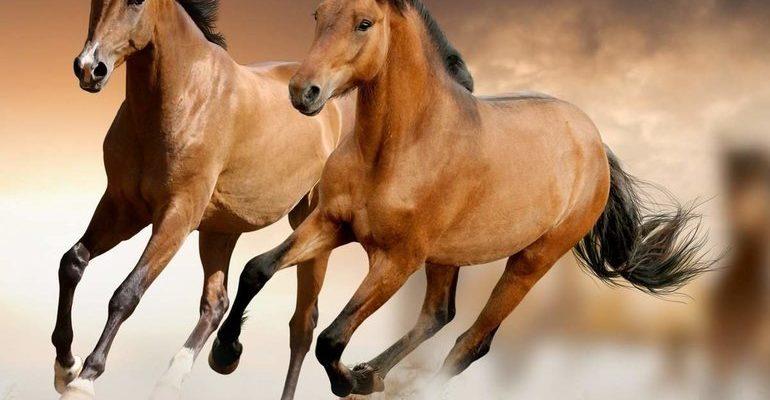 К чему снятся кони