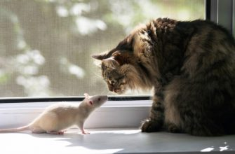 К чему снятся крысы и кошки