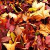 К чему снятся листья